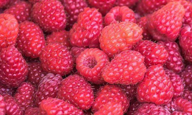 Best Rated Raspberry Ketone Brand