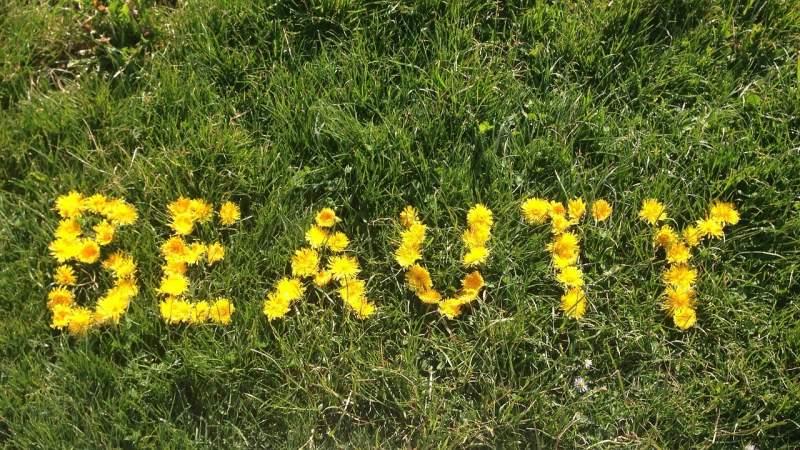 beauty-field-flower-grass-meadow