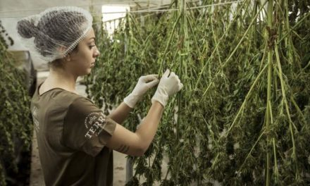 Nature Leaf Organics CBD: Cannabidiol Hemp Oil Supports Anxiety and Pain?
