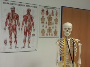 skeleton-bone-anatomy