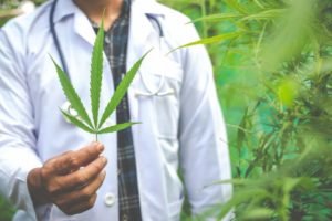 Medical marijuana, alternative herbal medicine concept