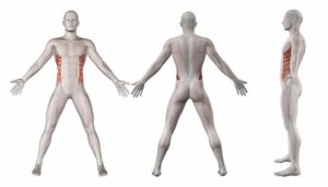Lumbars muscles