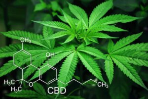 marijuana-leaves-cannabis-green