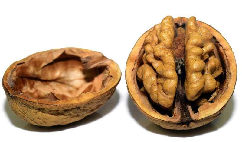 walnut-nut-shell-open